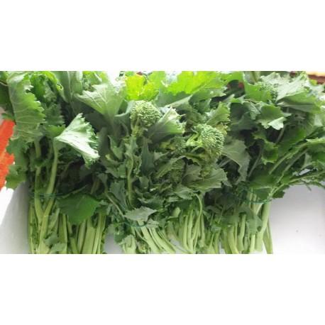 Frijarielli broccoli napoletani consegna gratuita Vienna